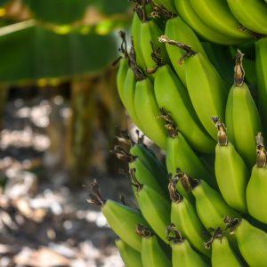 Bienes y Servicios Sostenibles Provenientes De Recursos Naturales